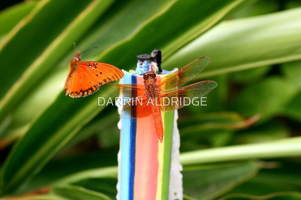 Winged Friends by DARRIN ALDRIDGE