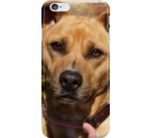 Handsome Pit Bull  Mix iPhone Case/Skin