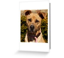 Handsome Pit Bull  Mix Greeting Card