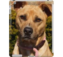 Handsome Pit Bull  Mix iPad Case/Skin