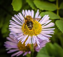 Successful Bee is Successful by Nicole Petegorsky