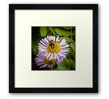 Successful Bee is Successful Framed Print