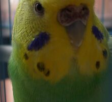 Pretty Birdy by MissA