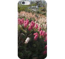 Richea scoparia at Mount Field iPhone Case/Skin