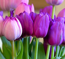 Tulip Bunch by John Nelson