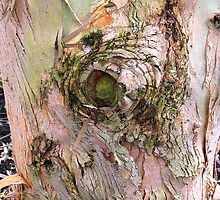 The Eye of the Tree by BizziLizzy
