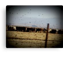 We Got Cows Canvas Print