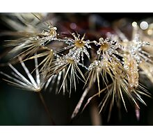 Adorned With Jewels Photographic Print