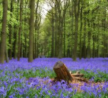 Mythical photograph of bluebells with a log in the foreground by NKSharp