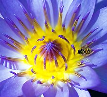 Purple Lily & Hover wasp by tony1014