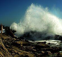 Taming the Waves by Beatrix M Varga