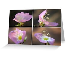 Dancing with the wind... Pink Evening Primrose (Oenothera speciosa) Free State, South Africa Greeting Card