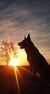 Dog Silhouette... by Qnita