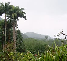 Dominica Rain Forest by jbbrown987