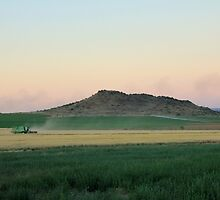 Harvest Time... Orania, Northern Cape, Free State by Qnita