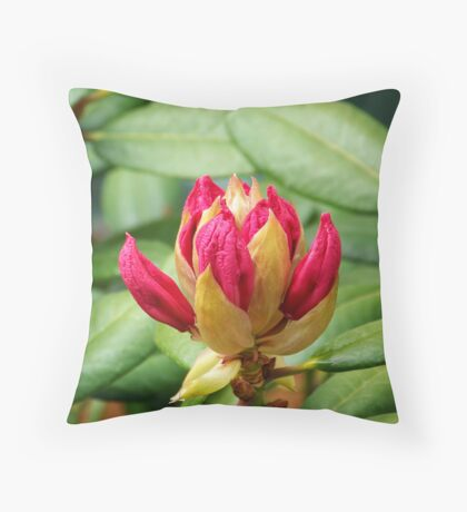 Adolescent Rhodie Throw Pillow