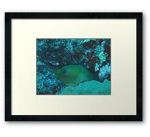 Moray Eel, Aruba Framed Print