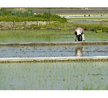 Rice Planting Photographic Print