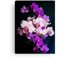 Bunch of orchids Canvas Print