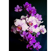 Bunch of orchids Photographic Print