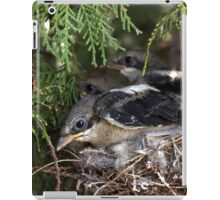 "Hush... If you don't make a move, she maybe won't see us. Die Jan Fiskaal (Laksman) ""Shrike Bird - Fiscal (Urolestes melanoleucus.)"" Free State, South Africa iPad Case/Skin"