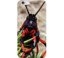 "This is a grin lady, not a smile!... ""Dictyophorus spumans – Koppie Foam grasshoppers."" Free State, South Africa iPhone Case/Skin"