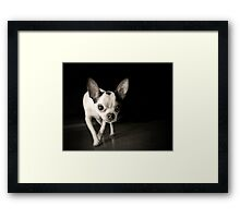 Chihuahua Black & White Framed Print