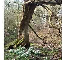 Kneeling Tree Photographic Print