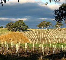 Howard Vineyard - Nairne by LeeoPhotography