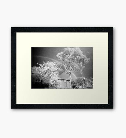 The Midnight Tree Framed Print