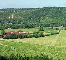 Denbies Wine Estate, Surrey hills, UK by Sergey Galagan