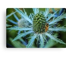 Bee on Sea Holly Canvas Print