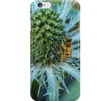 Bee on Sea Holly iPhone Case/Skin