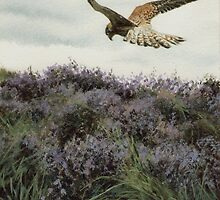 MOORLAND WILD by NorthernWitch