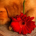 Pup & red flower by ingridewhere