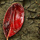 Red mangrove leaf by ingridewhere