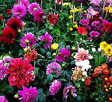 Flower - 24 by Atanu Chanda
