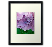 The Softness of Pedals Framed Print