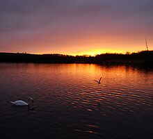 Cardiff Sunset  by Prys