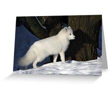 Arctic Fox. Greeting Card