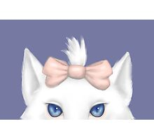White Kitty with a bow Photographic Print
