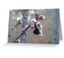 Bumble Bee on Peach Blossom Greeting Card