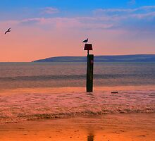 Seagulls at Dusk by Ciaran O'Hagan