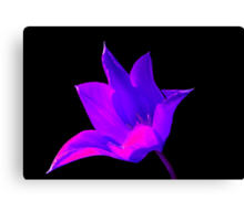 Vibrant Purple and Pink Lily Canvas Print