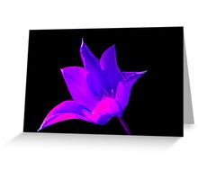 Vibrant Purple and Pink Lily Greeting Card