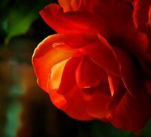My Begonia by Eileen McVey