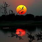 ZAMBIA SUNSET by Michael Sheridan