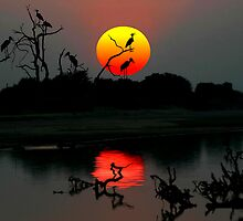 ZAMBIA SUNSET by Michael Sheridan
