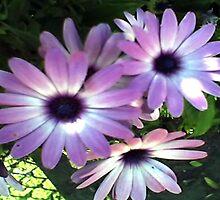 Purple Flowers by Lisa  Marie Peaslee