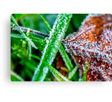 Morning frost in winter Canvas Print